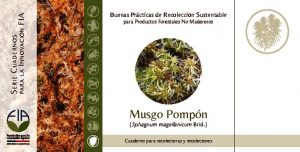 thumbnail of Musgo Pompon