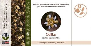 thumbnail of Quillay